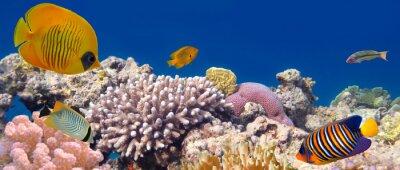 Naklejka Podwodne panoramy z ryb Zamaskowane Butterfly. Red Sea, Egypt