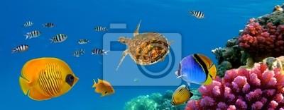 Naklejka Podwodne panoramy z żółwia, koralikowa rafa i ryby