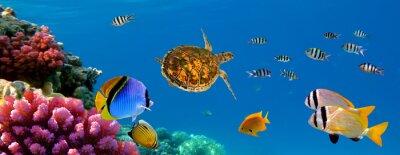 Naklejka Podwodne panoramy z żółwia, koralikowa rafa i ryby . Sharm el