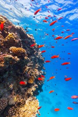 Naklejka Podwodne rafy koralowej