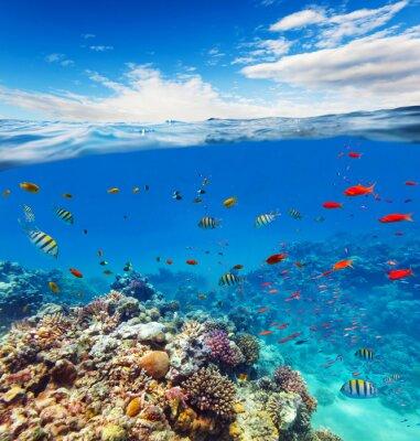 Naklejka Podwodne rafy koralowej z horyzontu i wody fale
