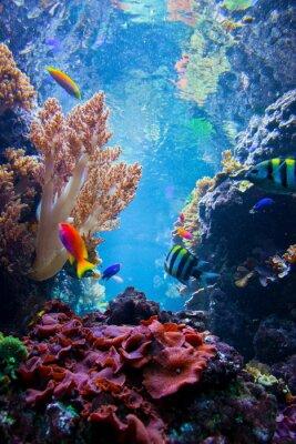 Naklejka Podwodne sceny z ryb, rafa koralowa