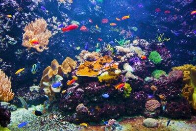 Naklejka Podwodne sceny z ryb, rafy koralowej