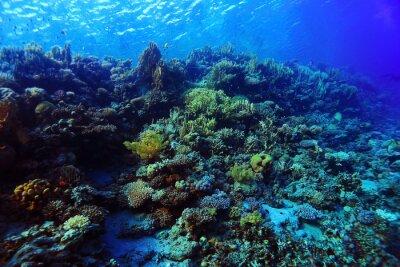 Naklejka Podwodne tropikalnych widokiem na morze