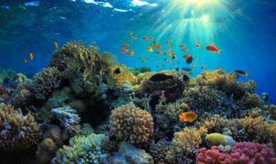 Naklejka Podwodne widoku