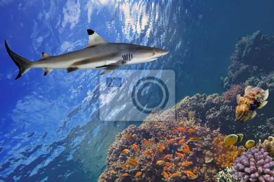Naklejka Podwodne zdjęcia rafy koralowej z rekina