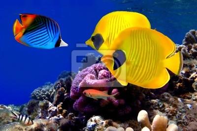 Naklejka Podwodne zdjęcia z rafy koralowej