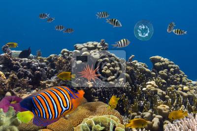 Naklejka Podwodne życie Morza Czerwonego w Egipcie