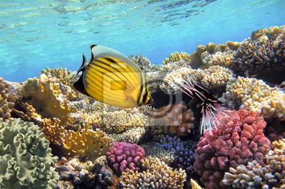 Naklejka Podwodne życie rafy koralowej ciężko