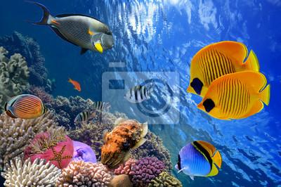 Naklejka Podwodny świat