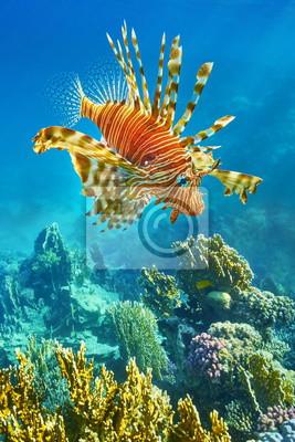 Naklejka Podwodny widok na koralikowa rafa i ryby, Dahab, Morze Czerwone, Egipt