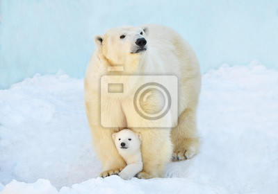Naklejka polar bear in snow