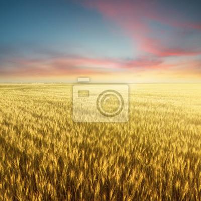 Pole i niebo podczas wschodu słońca. Krajobrazu rolniczego w okresie letnim