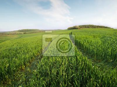 Pole i niebo w czasie letnim. Krajobraz rolniczy