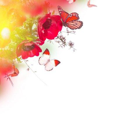 Naklejka Pole maków i zielona trawa i motyl