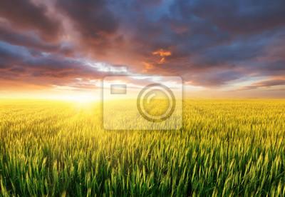 Naklejka Pole podczas zachodu słońca. Krajobraz rolniczy w okresie letnim. Krajobraz przemysłowy jako tło. Krajobraz farmy podczas zachodu słońca.