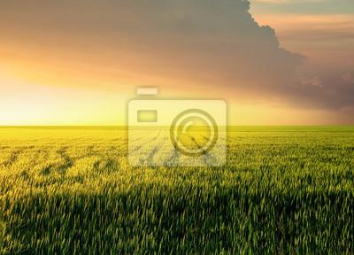 Pole podczas zachodu słońca. krajobrazu rolniczego