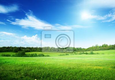 Naklejka pole trawy i niebo idealny