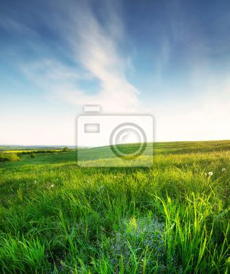 Pole w czasie dnia. Piękny naturalny krajobraz w okresie letnim