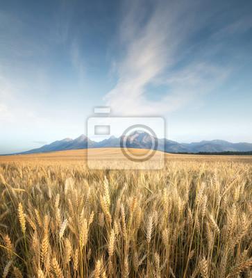 Naklejka Pole w dolinie górskiej. Krajobraz rolniczy w Tatrach, na Słowacji