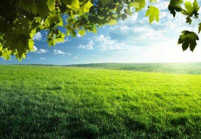 Naklejka pole wiosny trawy i lasu