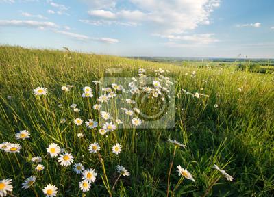 Pole z kwiatami w czasie dnia. Piękny naturalny krajobraz w okresie letnim