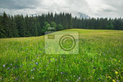 Pole z kwiatami w regionie górskim. Piękny naturalny krajobraz w okresie letnim