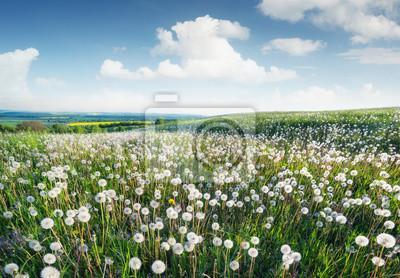 Pole z kwiatami w wiosna czasie. Piękny naturalny krajobraz
