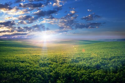 Naklejka Pole zielona trawa