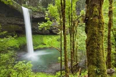 Naklejka Południowa Falls w Silver Falls State Park, Oregon, USA