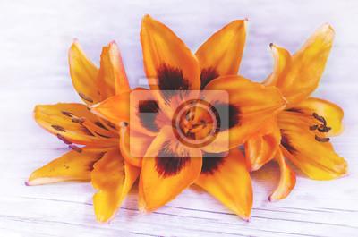 Naklejka pomarańczowe kwiaty lilia