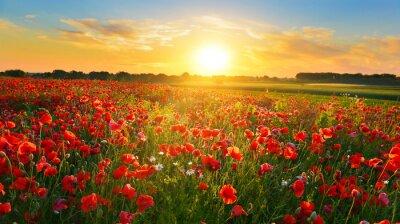 Naklejka Poppy field o wschodzie słońca w lecie wsi