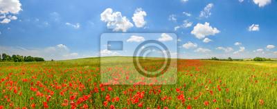 Poppy field w lecie wsi
