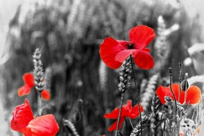 Naklejka Poppy - Na Dzień Pamięci
