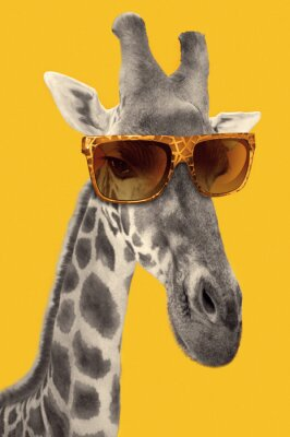 Naklejka Portrait of a giraffe with hipster sunglasses