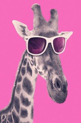 Naklejka Portrait of a giraffe with hipster sunglasses