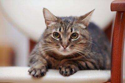 Naklejka Portret angry paski kot z żółtymi oczami