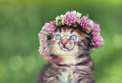 Portret cute little kitten dreaming z wianek z koniczyny