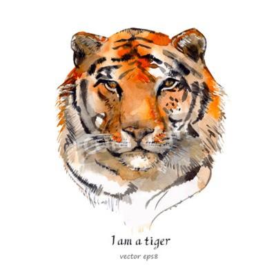 Naklejka portret tygrysa. akwarela