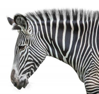 Naklejka Portret zebra