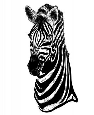 Naklejka Portret zebra na białym tle