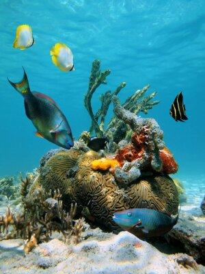 Naklejka Powierzchni wody i życia morskiego