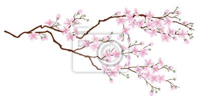 Naklejka Poziome oddziału wiśniowe kwiaty. Realistyczne ilustracji wektorowych na tle odizolowane.
