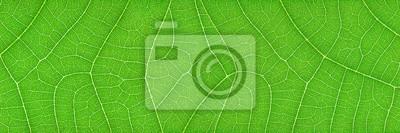 Naklejka poziomy zielony liść tekstury dla wzoru i tła