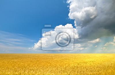 Promienie słoneczne powodzi pole pszenicy ze światłem