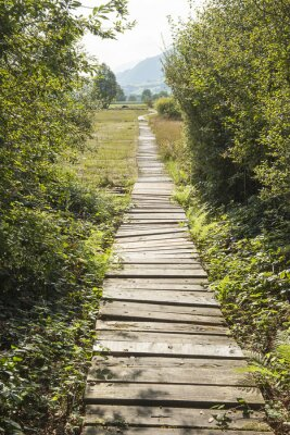 Naklejka Prügelweg w rezerwacie przyrody w Stans NW