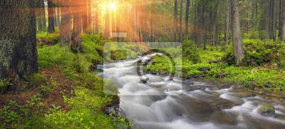 Naklejka Prut rzeka w dzikim lesie