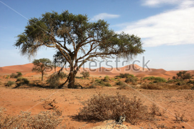 Naklejka Pustynia Namib, Namibia