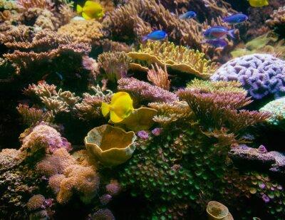 Naklejka Rafa koralowa