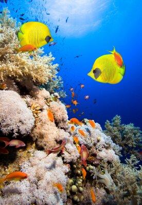 Naklejka Rafa koralowa i Fish Butterfly Masked